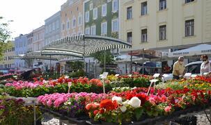 Rieder Grünmarkt