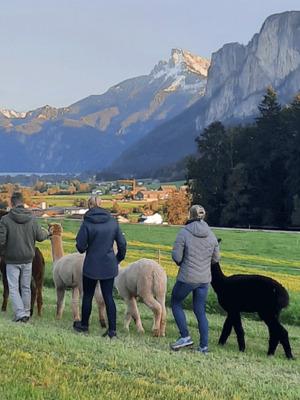 Kräuter-Erleben mit Alpakas für Kinder