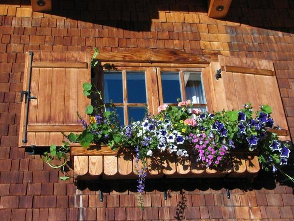 Blumen rund ums Haus (2)