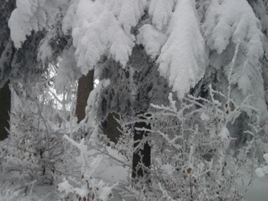 Schneeblatt 0110