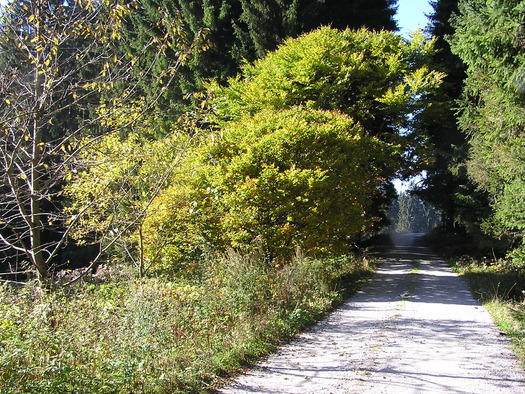 Wanderwege Rosenhof (© Gemeinde Sandl)
