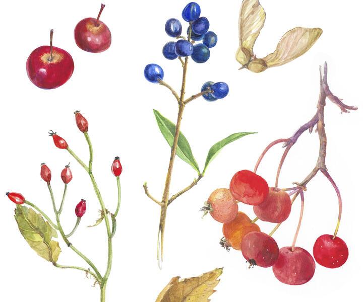 Grafik von Mariana Nikolai Pacheva