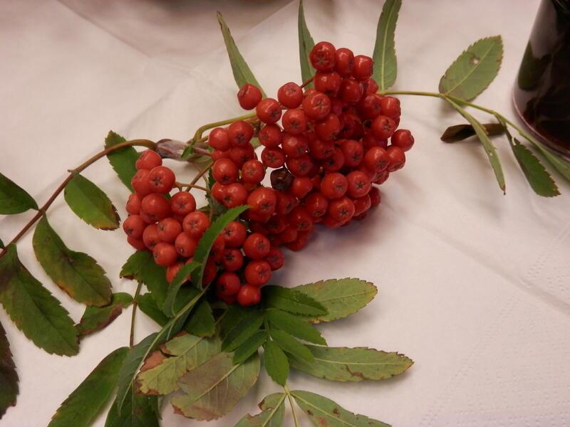 Wilde Früchte