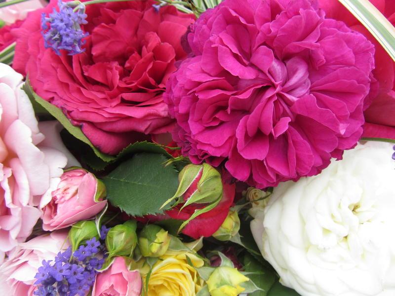 Vortrag Sprache der Blumen