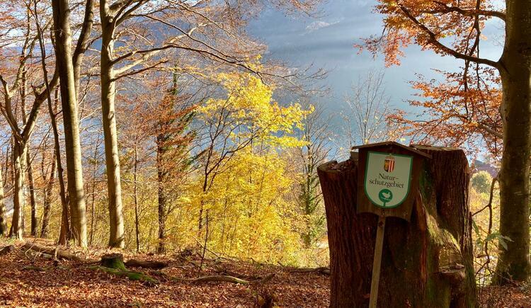 Kastanienwald Naturschutzgebiet. (© TVB Attersee-Attergau)