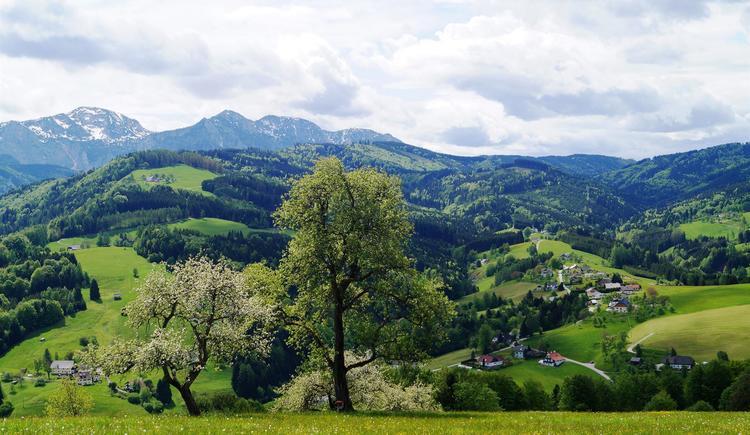 Frühling im Aurachtal (© Clemens Schnaitl)