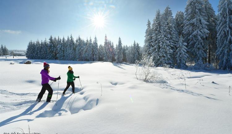 Schneeschuhwandern (© OÖ Tourismus | Röbl)