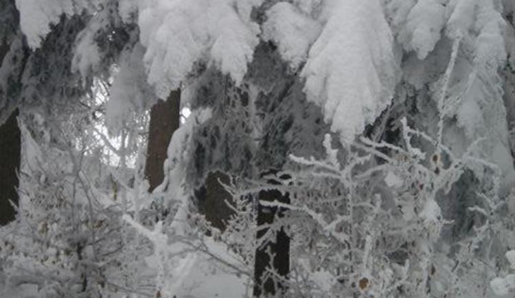Schneeblatt 0110 (© Privat)