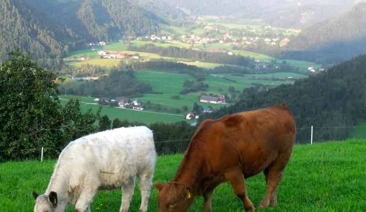 Sommerlandschaft (© Ascher Hütte)