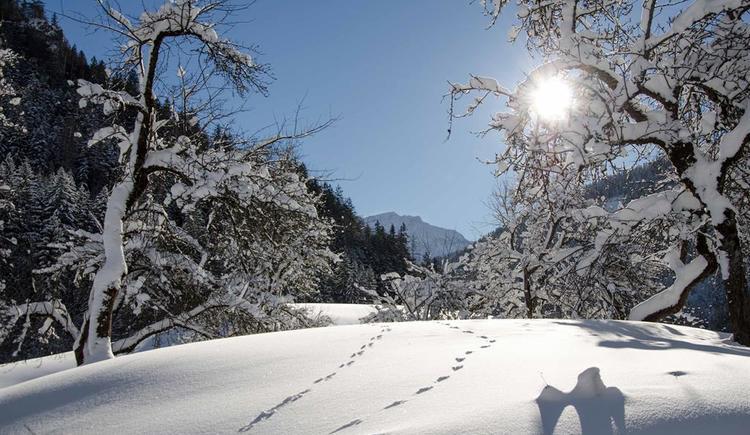 bezaubernder Winter (© werner mair)
