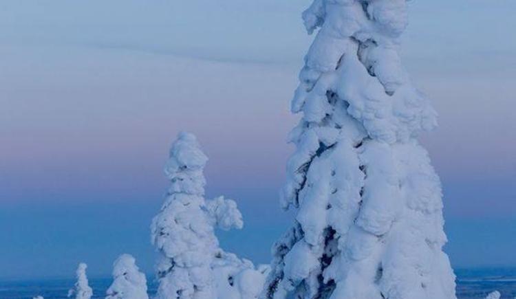 `Baum-Skulpturen` durch den Schnee
