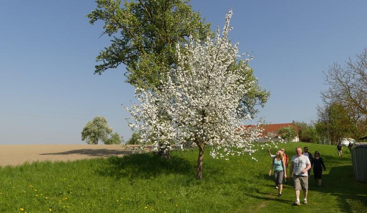 P1020947 (© Naturpark Obst-Hügel-Land)