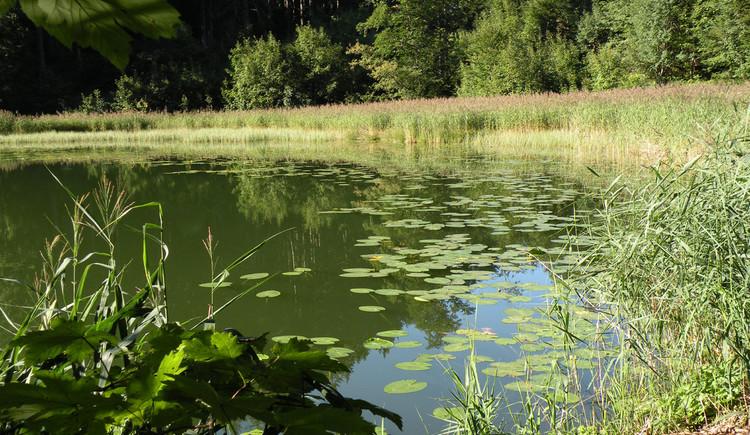 Filblingsee (© Tourismusverband Faistenau)