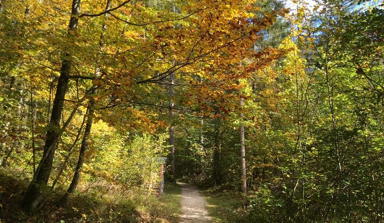 Der wunderschöne Wanderweg führt uns durch den Sarsteinwald. (© Manuela Elmer)