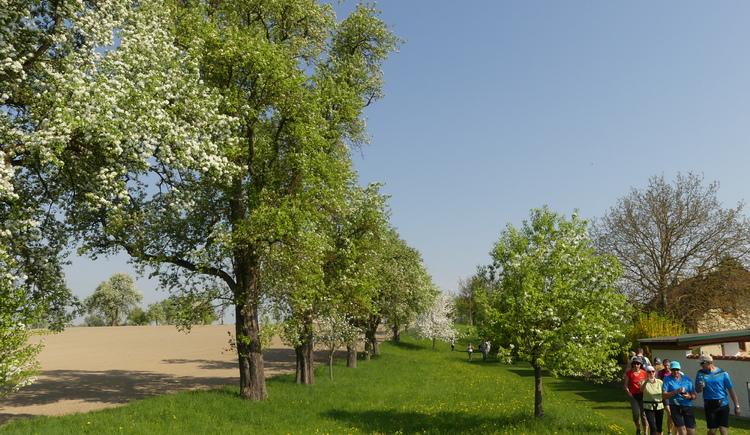 P1020962 (© Naturpark Obst-Hügel-Land)