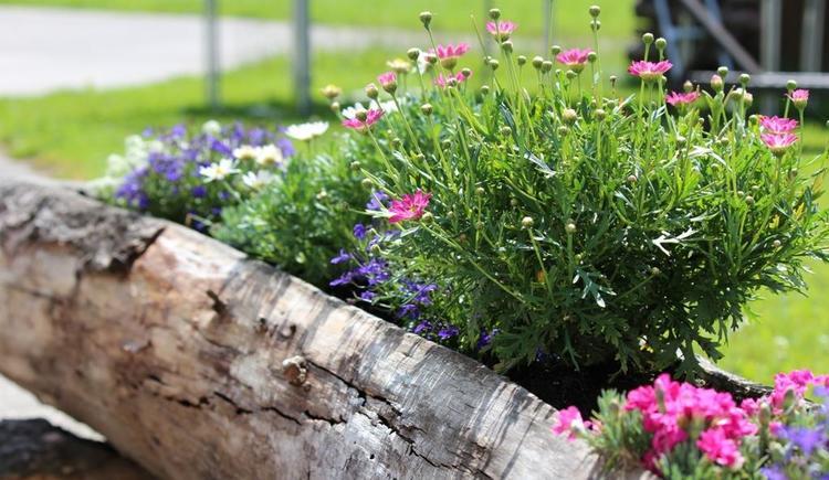 Blumentrog eine Augenweide (© Unterranner)
