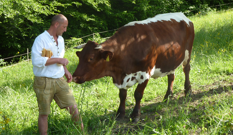 farmer with a cow at the meadow. (© Schafleitner-Kroiß)