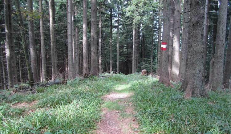 Blick auf einen schmalen Pfad, der durch einen Wald führt. (© www.mondsee.at)
