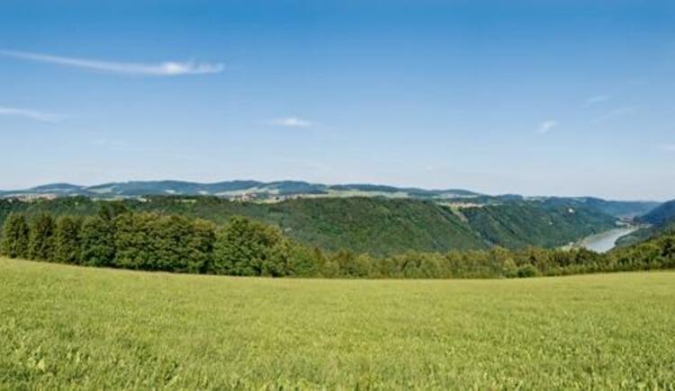 Blick ins Donautal in Richtung Schlögener Schlinge (© WGD Donau Oberösterreich Tourismus GmbH/Weissenbrunner)