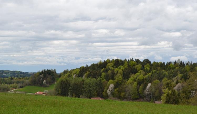 Adelsberg-Weg in der Bewegungs-Arena Innviertel.Schöne Ausblicke über das Innviertel entlang des Adelsberg-Weges in der Bewegungs-Arena Mettmach genießen. (© Innviertel-Tourismus)
