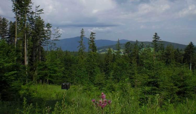 Blick auf einen Wald, im Hintergrund die Berge. (© www.mondsee.at)