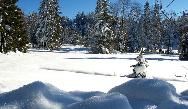 Winterlandschaft. (© Edith Kudlovic)
