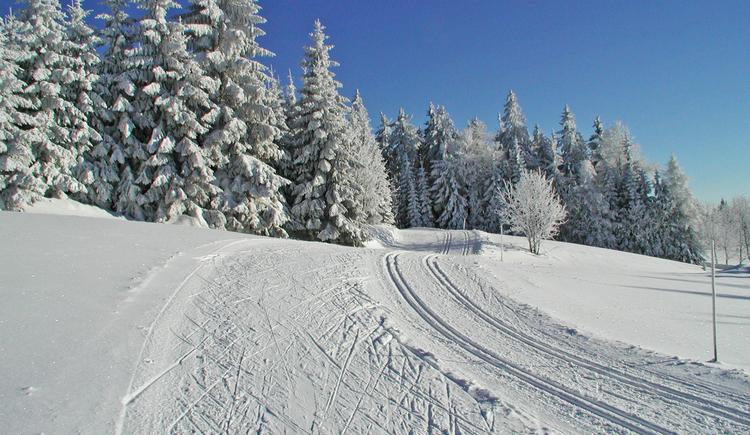 Wenn es die Schneemenge erlaubt, finden Sie Kollerschlag bestens präparierte Loipen! (© Ferienregion Böhmerwald)