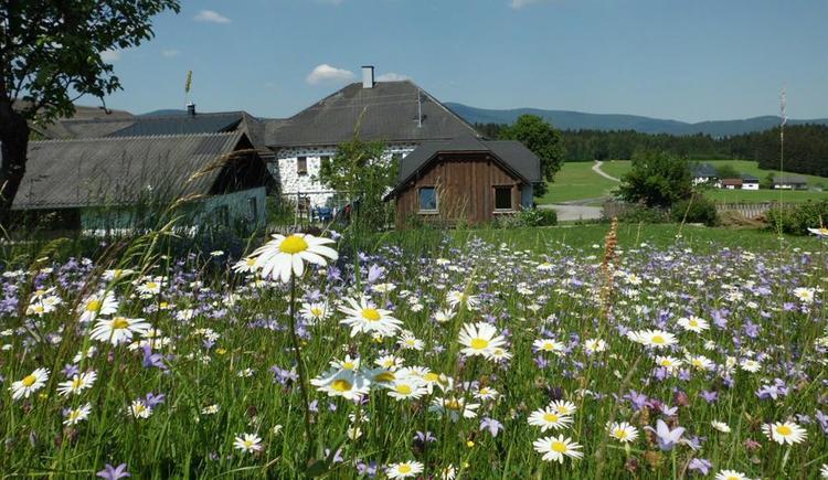 Blumenwiese (© Privat)