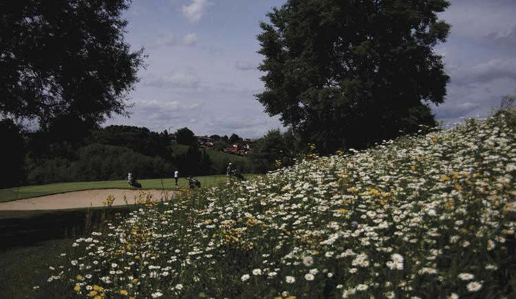 golfen-blumenwiese-tee-7-2015-05-31-landschaft-und-golfplatz-023