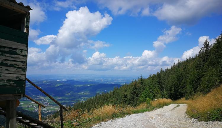 Mountainbike Strecke Hochsalm. (© Johanna Simmer)