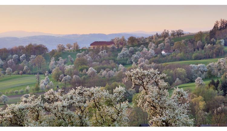 Obstbaumbl%c3%bcte im Naturpark Obst-H%c3%bcgel-Land komp %c2%a9 Andreas R%c3%b6bl (© Andreas Röbl)