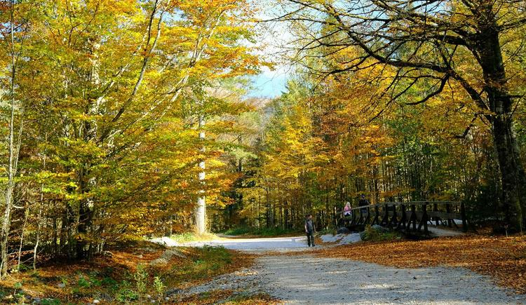 Spaziergang im Herbst (© Rudolf Kirth)