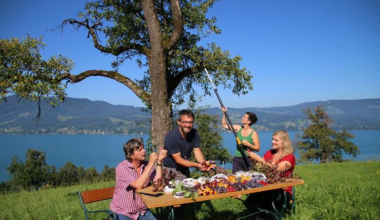 Alles Powidl im Zwetschkenreich im Naturpark Attersee-Traunsee (© Naturpark Attersee-Traunsee/Stephanie Schwarzenlander)