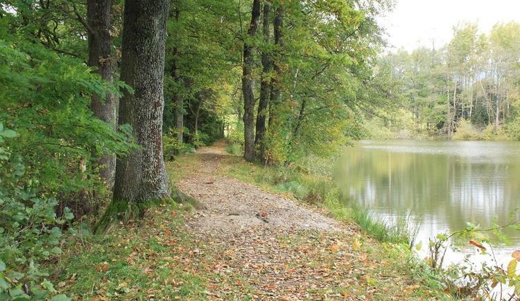 Bäume am Ziegelteich (© Ferienregion Böhmerwald)