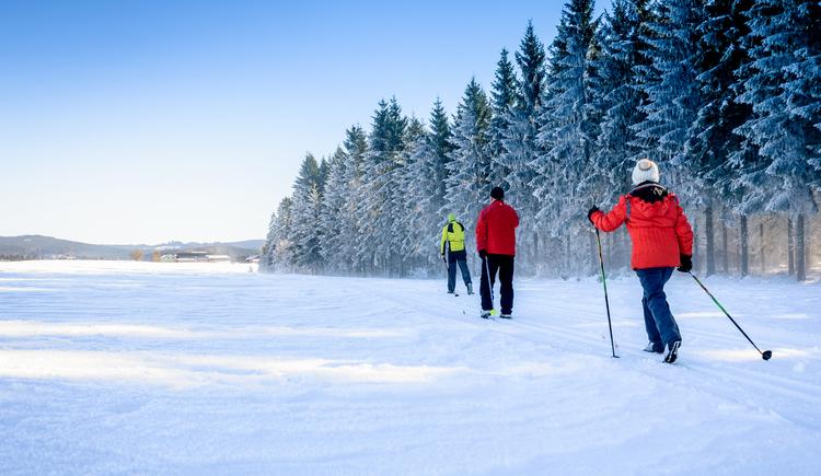 3 Langläufer auf einer Langlaufspur neben dem Wald. (© Tourismusverband Mühlviertler Alm Freistadt_Hawlan)