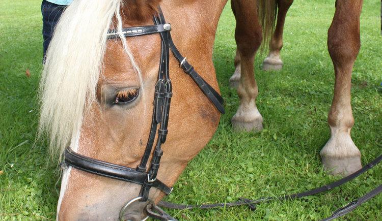 Pferd.jpg (© TVB Attersee-Attergau)