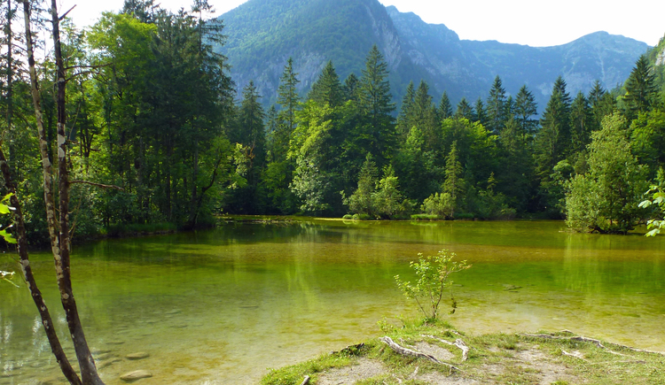 Lake Koppenwinkl is surrounded by this beautiful green forest
