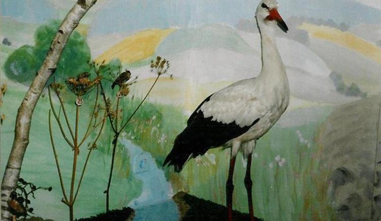 Vogelmuseum - Weißstorch (© Ferienregion Böhmerwald)