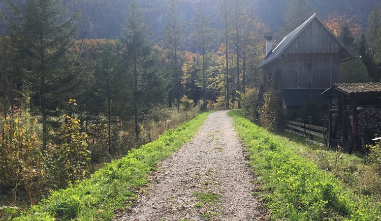 Der wunderschöne Wanderweg Nr. 6 führt uns entlang der Traun zurück ins Ortszentrum. (© Manuela Elmer)