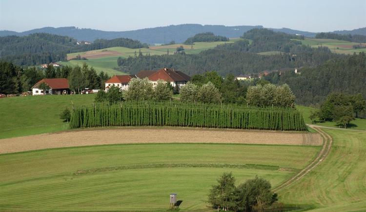 Landschaft (© Privat)