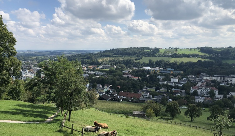Magdalenaberg-Runde mit Ausblick über Bad Schallerbach (© Urlaubsregion Vitalwelt Bad Schallerbach / Sarah Holzer)