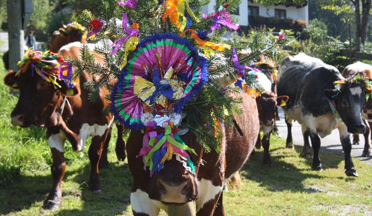 Die geschmückten Kühe treffen im Ort Gosau ein. (© Grill Elisabeth)