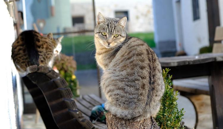 Katzen (© Rudolf Kirth)