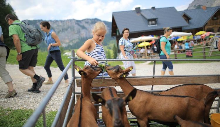 Alles wissenswerte über Ziegen (© Daniel Hinterramskogler)
