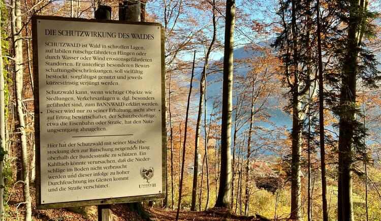 Kastanienwald Tafel - Die Schutzwirkung des Waldes. (© TVB Attersee-Attergau)