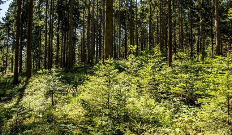 Waldschule Almtal Mischwald (© Historicum Scharnstein, Foto Monika Löff)