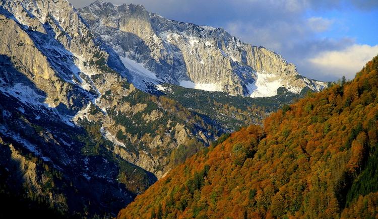 Alte Buchenwälder im Bodinggraben, Nationalpark Kalkalpen