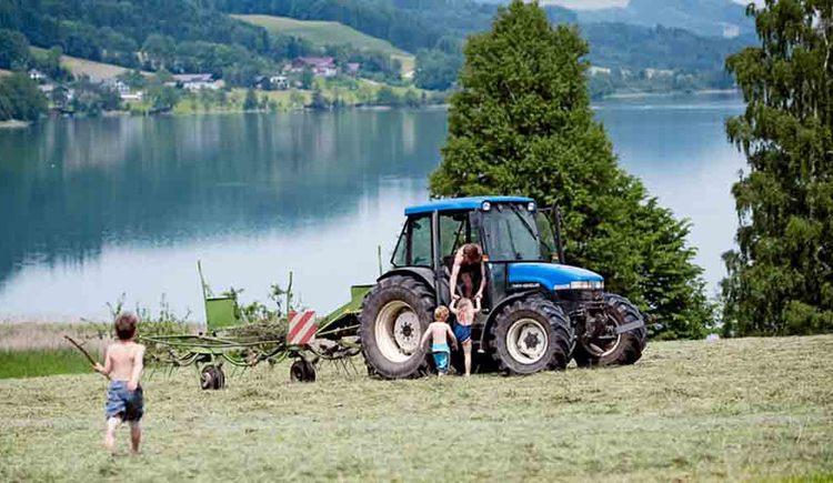 Traktor beim Kreiseln vom Heu auf dem Feld, Kinder helfen. (© Gaderer)