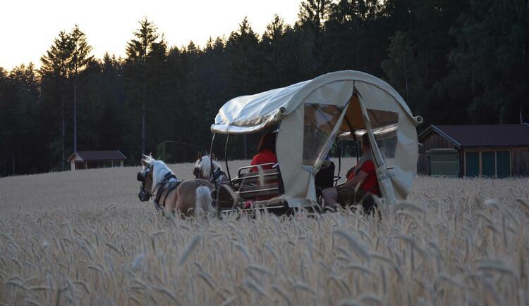 Kutschenfahrt durchs Kornfeld (© Georgs Kutscher Hof)