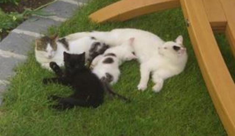 Katzen (© Privat)